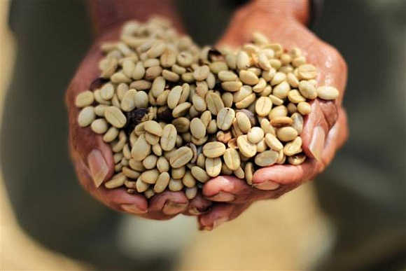 Amazing images show coffee processing in El Salv