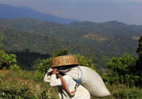 Amazing images show coffee processing in El Salvador