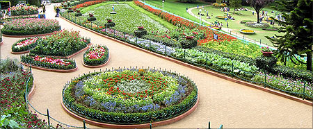 Botanical garden, Ooty.