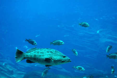 Ocean fisheries is an example of the consequences of open access for a depletable resource.