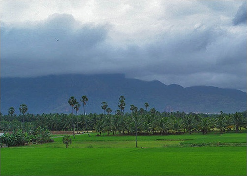 Paddy field in Nagercoil.