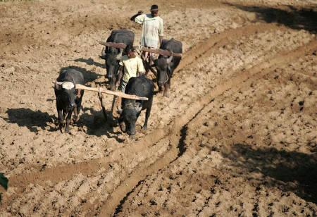 Agriculture sector is seeing a decline in output.