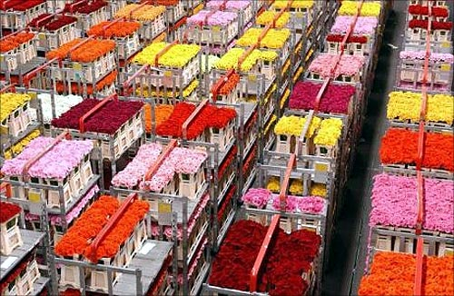 Aalsmeer Flower Auction.