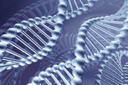 Scientists began to sequence some DNA molecules in the late 1970s.