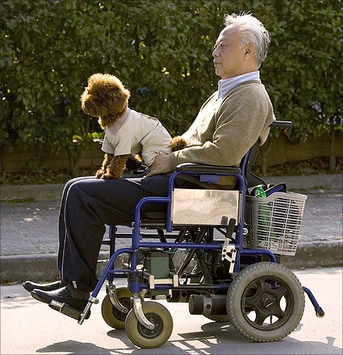An elderly man drives a wheelchair with his pet dog near a park in Shanghai.