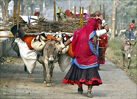 A veiled nomadic woman from the desert Indian state of Rajasthan walks near a donkey carrying her belongings in Noida on the outskirts of New Delhi.