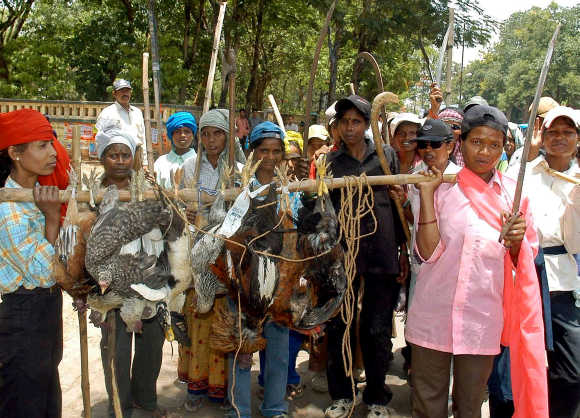 Women belonging to the primitive Oraon tribe hold livestock after hunting in a forest in Ranchi, Jharkand.