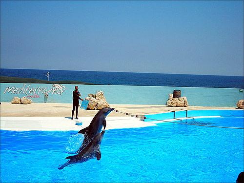 Dolphin show at Mediterraneo Marine Park, Malta.