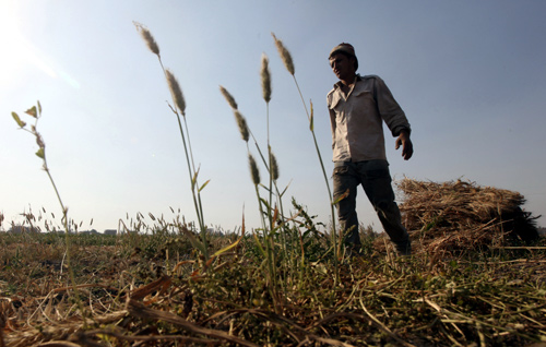 Wael Abo El Saoud, a 25 year-old farmer, harvests wheat on Miet Radie farm El-Kalubia governorate, about 60 km (37 miles) northeast of Cairo.