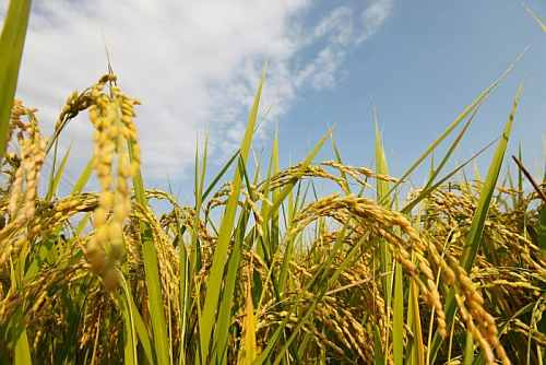 Par Panel for rice at Rs 3, wheat at Rs 2 to all