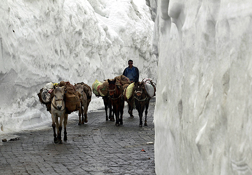 A man guides donkeys through a mountainous road covered by snow on the Srinagar-Leh highway.