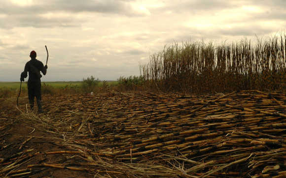 Worker harvests sugarcane near Swaziland's capital Mbabane.