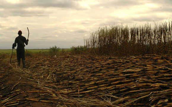Worker harvests sugarcane near Swaziland's capital Mbabane.