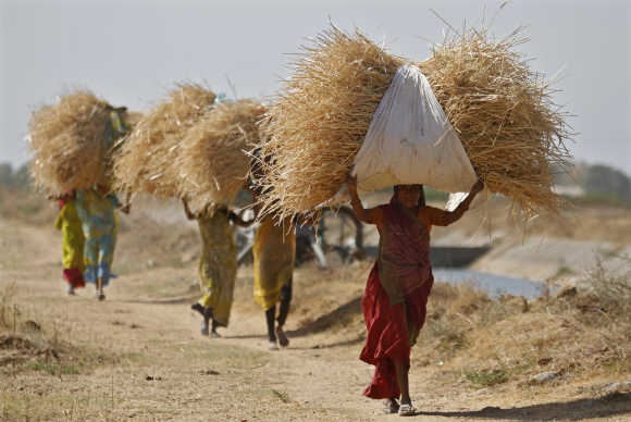 Women carry dried grass to feed their cattle.