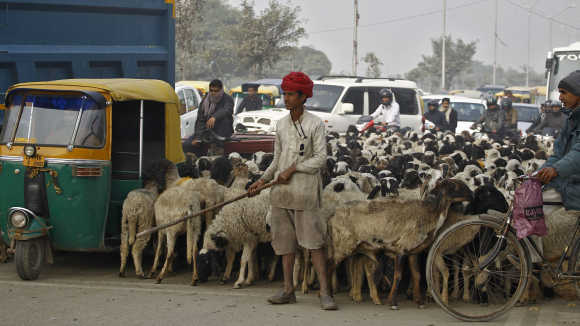 A nomadic shepherd with his herd of sheep waits for the signal at a busy road junction in Noida.