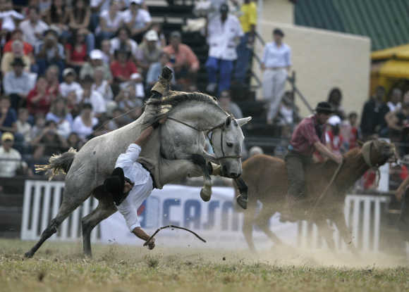 A gaucho is unseated by an untamed horse during the celebration of the 'Criolla' week in Montevideo.
