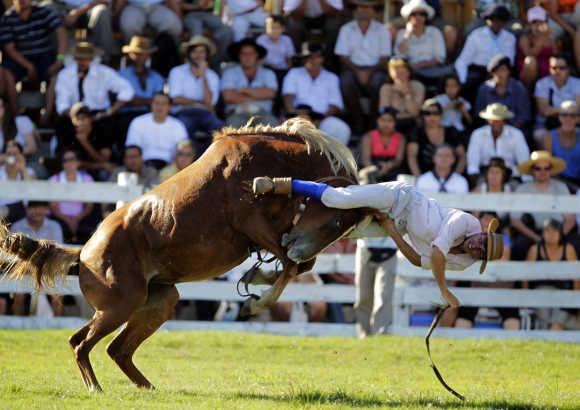 A gaucho is thrown off an untamed horse during the Patria Gaucha Festival in Tacuarembo, 400km north of Montevideo.