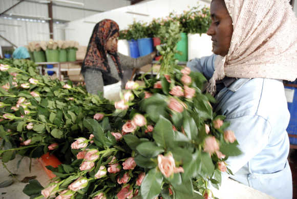 People work at the 'packhouse' where flowers are de-leafed and boxed for export, in Addis Ababa.