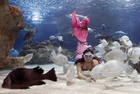 A woman dressed as a mermaid dives to feed fish at the Gongti Richina Underwater World in Beijing. The fish are fed three times a day by a woman dressed as mermaid as additional entertainment for visitors.