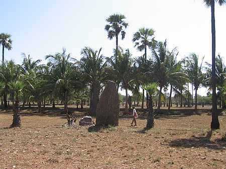 Standing Stones at Kodumanal