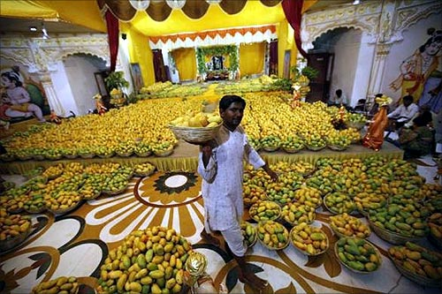 A Hindu priest carries a basket of mangoes to distribute among devotees after it was offered to Hindu God Lord Krishna inside a temple during a mango festival in Ahmedabad.