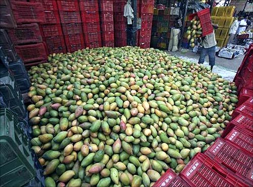 India's love affair with mangoes