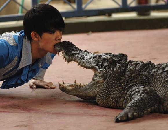 A man performs with a crocodile at a zoo in Hanoi.