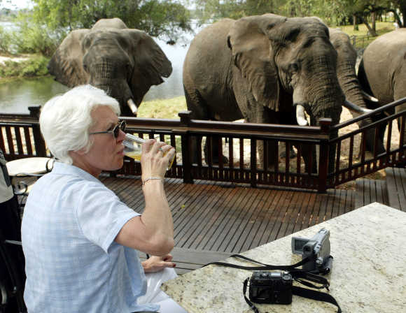 A tourist sips her drink while watching elephants graze at a hotel in Livingstone, on the Zambian side of the Victoria Falls.