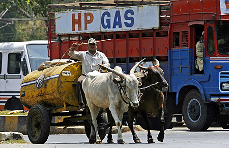 A worker transports kerosene oil in a bullock cart to retail outlets in Mumbai.