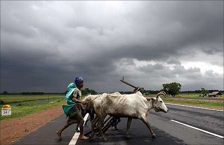 A farmer and his bullocks cross a highway against the backdrop of monsoon clouds in Singur.