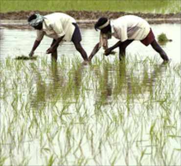 Poor rain: Inflation haunts agriculture