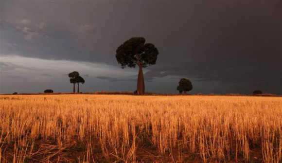 Freshly cut wheat stands under approaching storm clouds on a property owned by farmer Scott Wason near Roma, 430km west of Brisbane, Australia.