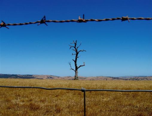 A dead tree behind a barbed-wire fence stands in the drought-effected farming area of the McLaren Vale region in South Australia, 80km south-east of Adelaide.