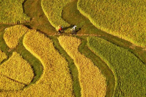 Two farmers walk on a terraced paddy field in Gaopo township, Guiyang city, southwest China's Guizhou province.