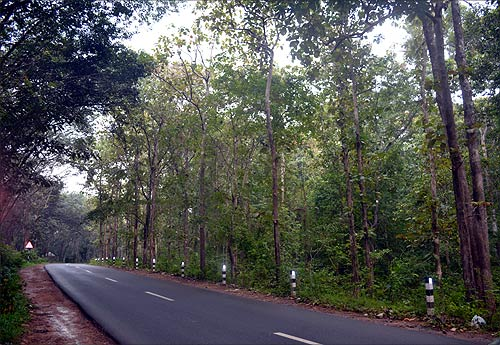 A road in Thiruvananthapuram, Kerala.