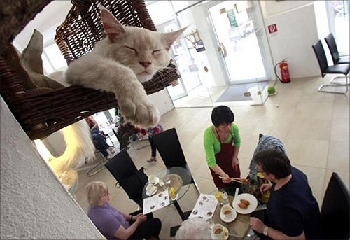 Cat 'Luca' sleeps in his basket as a waitress serves some food to customers in Vienna's first cat cafe.