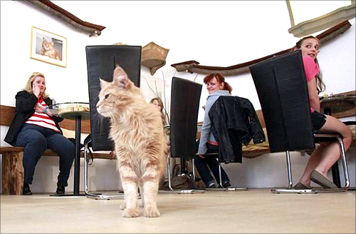 Visit Vienna's first cat cafe!
