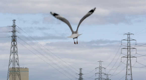 A seagull flies past high voltage electrical transmission towers in Melbourne.