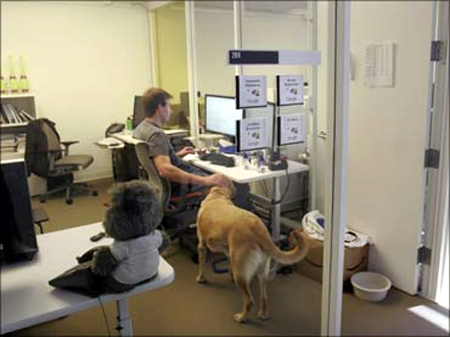 At the Google headquarters in Mountain View, California, an employee shares a moment with his dog in his office.