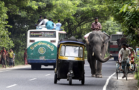 An auto-rickshaw (centre) overtakes an elephant on a busy highway near Dhaka.