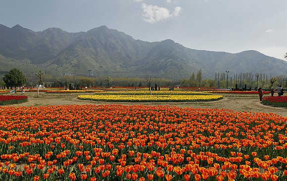 Tulip garden in Srinagar.