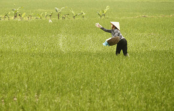A farmer throws fertiliser on a rice paddy field in La Duong village, outside Hanoi, Vietnam.