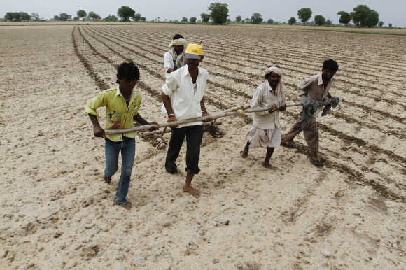 Farmers plough and sow cotton seeds in a field in Shahpur village near Ahmedabad.