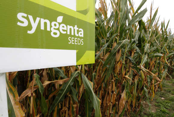 Logo of Swiss agrochemicals maker Syngenta in front of a cornfield near the company's plant in Stein near Basel, Switzerland.