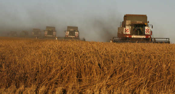 Combine harvesters work on wheat field outside Svetlolobovo in Russia.