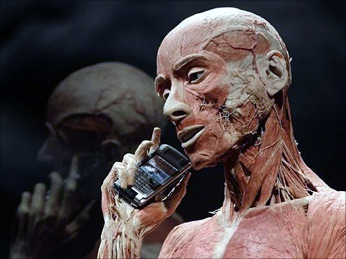 A plastinated body of a man is pictured during an exhibition preview at Naturhistorisches Museum (Natural History Museum) in Vienna.