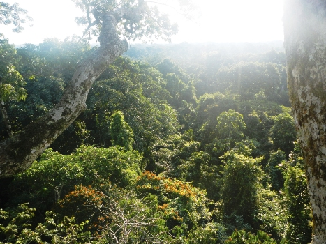 Arguably the most biodiverse place on the planet.