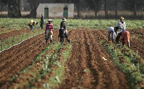 Farm workers on a farm in South Africa.