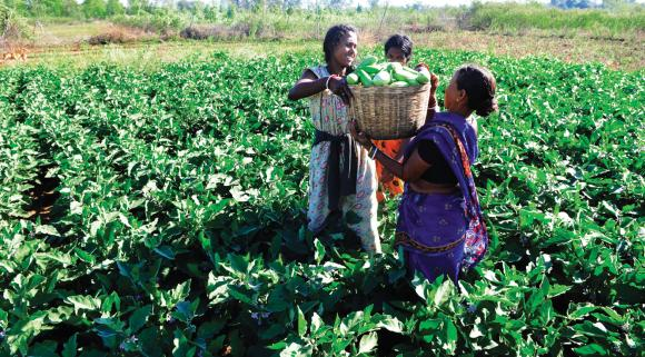 Breaking away from the tradition of cultivating paddy, family of Ram Oraon in Ranchi's Malhan Bhuiyadih now grows vegetables.