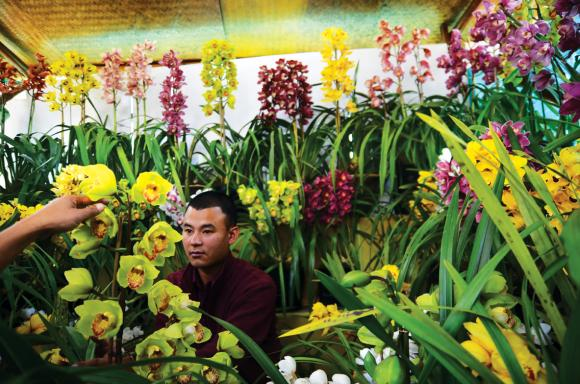 A farmer displays cymbidium orchids at the show. Arguably the most biodiverse place on the planet.